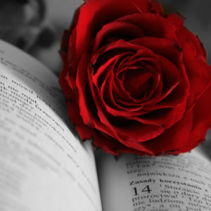 Rose on book in black and white and red